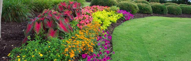 colorful backyard flower garden oasis with shrubberies and green grass