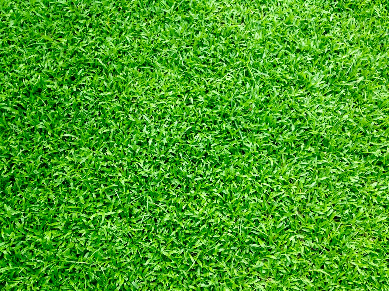 close up of artificial grass
