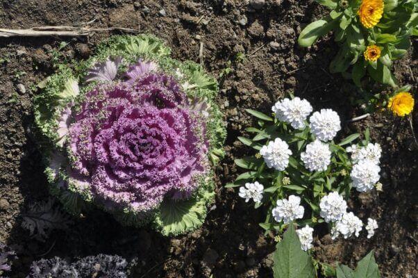 Gardening flowers and veggies